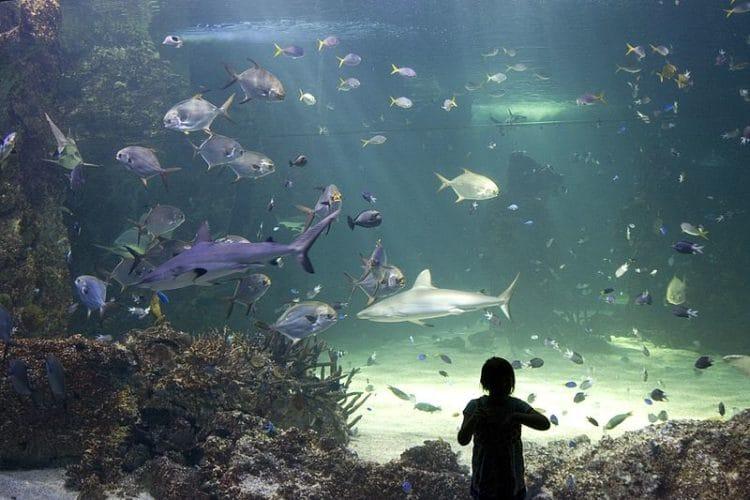 Сиднейский аквариумдостопримечательности Сиднея
