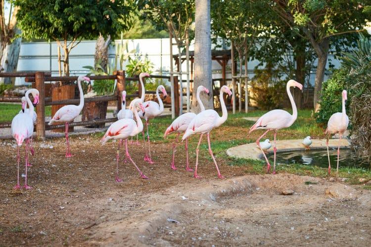 Зоопарк - достопримечательности Лимассола