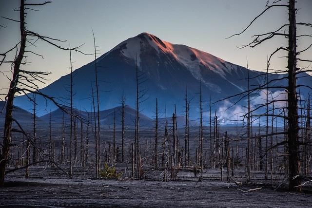 Мёртвый лес - достопримечательности Камчатки