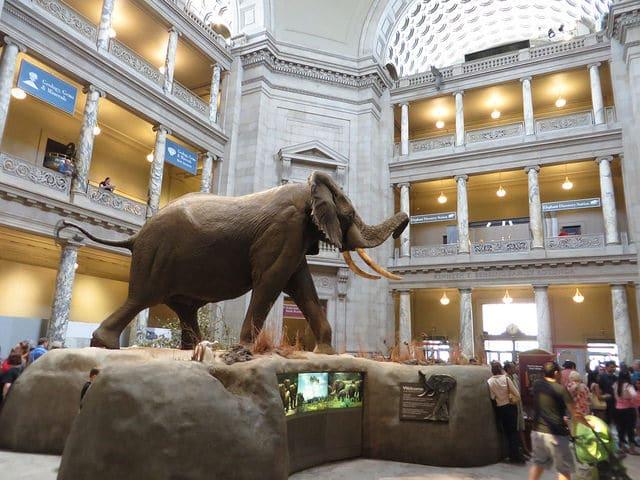Музей естественной истории - достопримечательности Вашингтона