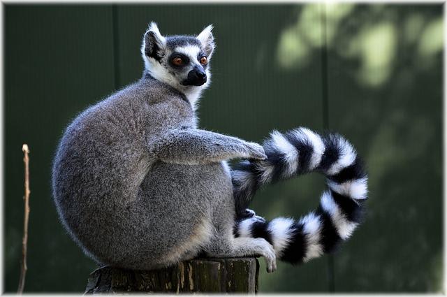 Зоопарк Тропик парк - достопримечательности Евпатории