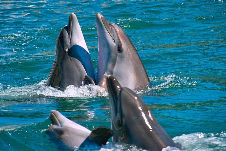 Дельфинарий «Немо» - достопримечательности Феодосии