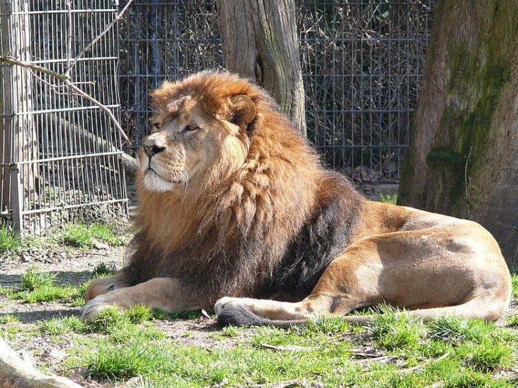 Дортмундский зоопарк - достопримечательности Дортмунда
