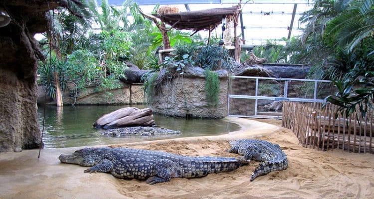 Кёльнский зоопарк - достопримечательности Кёльна