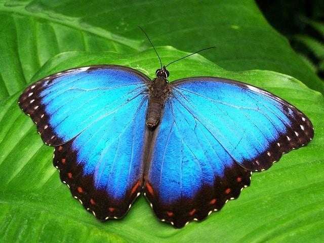 Парк бабочек - достопримечательности Хайнаня