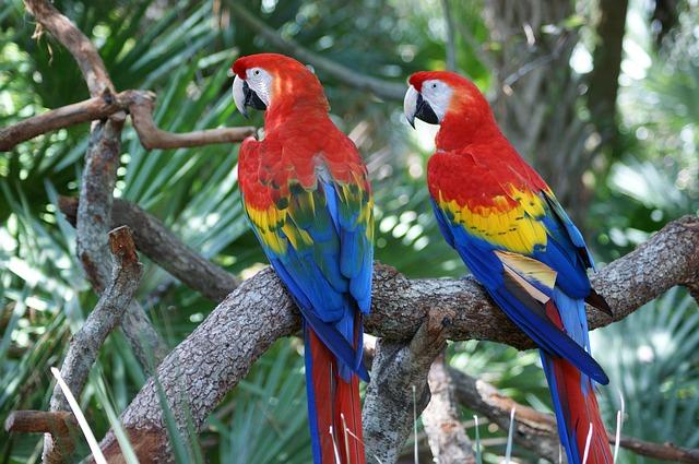 Зоопарк Сафари Фауна Авентура - достопримечательности Толедо