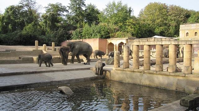 Зоопарк Ганновера - достопримечательности Ганновера