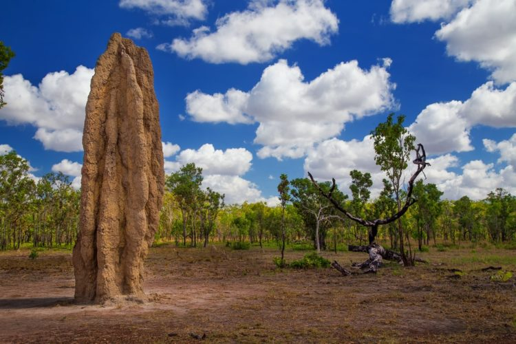 Национальный парк Какаду в Австралии