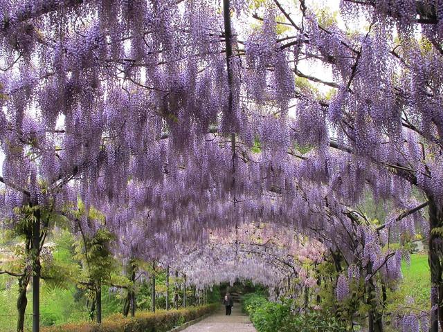 Сад Бардини в Италии