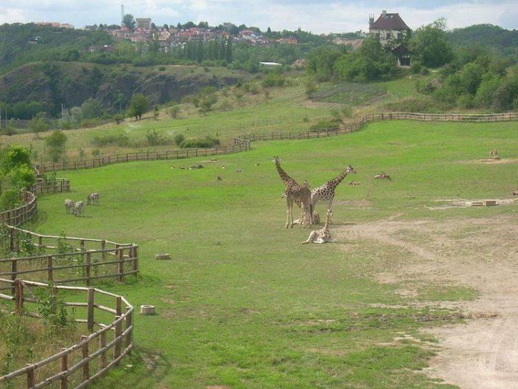 Пражский зоопарк в Чехии