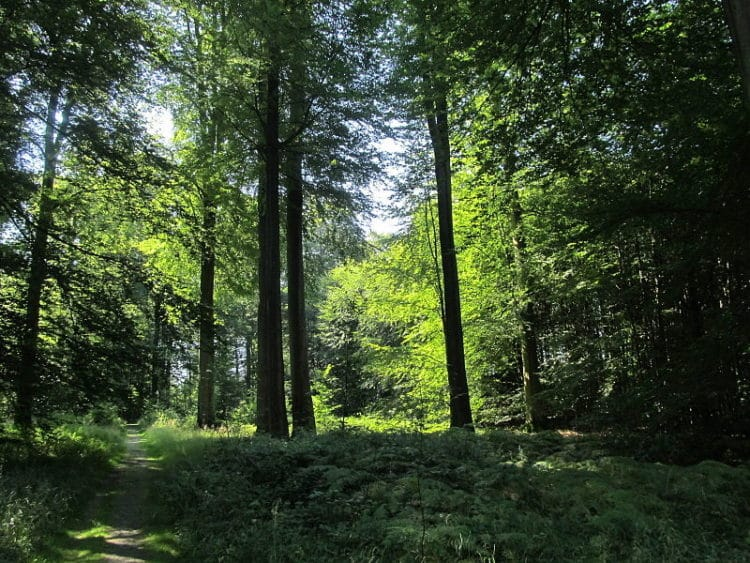 Суаньский лес в Бельгии