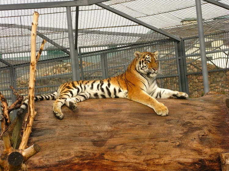 Гродненский зоопарк - достопримечательности Гродно
