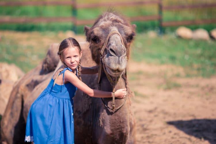 Парк верблюдов - достопримечательности Ларнаки