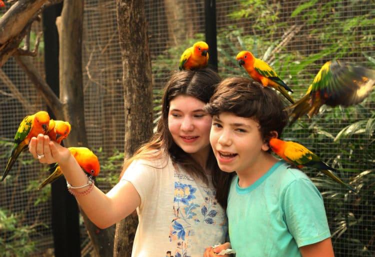 Парк Птиц - достопримечательности Пхукета