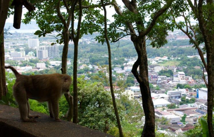 Гора обезьян - достопримечательности Пхукета