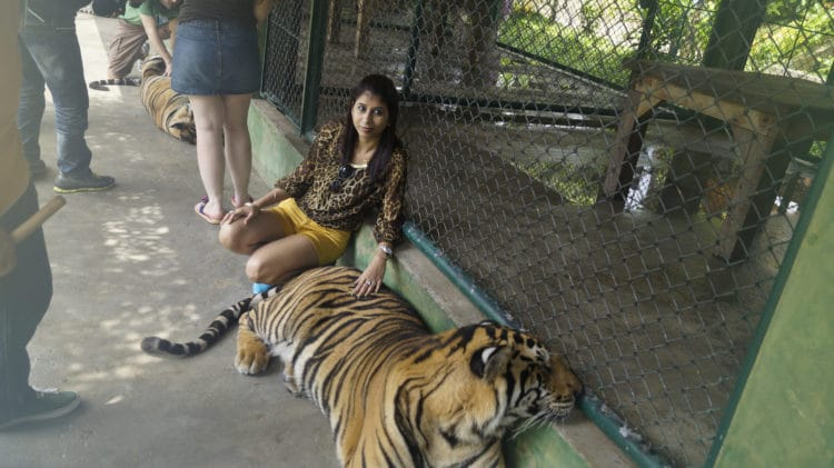 Королевство тигров - достопримечательности Пхукета