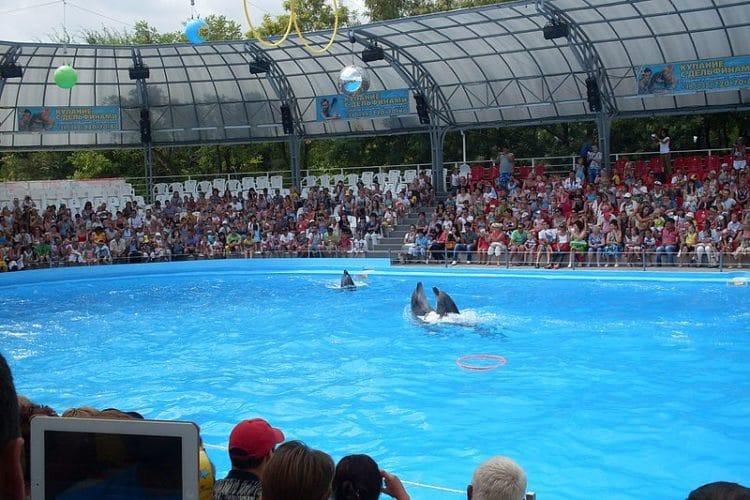 Одесский дельфинарий «Немо» - достопримечательности Одессы