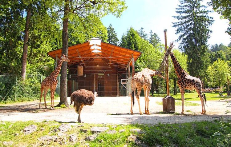 Люблянский зоопарк - достопримечательности Любляны